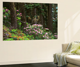 Rhododendrons and Trees, Washington State, USA Prints by Randy Green