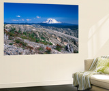 Mt Adams from Windy Ridge, Mt St Helens Volcanic National Monument, Washington, USA Posters by Kent Foster