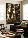 Totem Pole in Rainforest, Suka, Alaska, USA Posters af Howie Garber