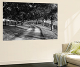 Row of Trees and Country Lane at Dawn, Bluegrass Region, Kentucky, USA Plakater af Adam Jones