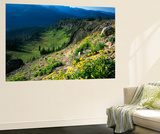 Wildflowers Along Continental Divide, Wyoming, USA Prints by Scott T. Smith