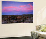 Teddy Bear Cholla Cactus, Anza-Borrego Desert State Park, California, USA Poster af Adam Jones