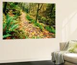 Autumn Bigleaf Maple Leaves, Columbia Gorge Scenic Area, Oregon, USA Posters af Stuart Westmorland