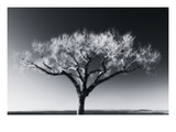 Glowing Tree Photographic Print by Jamie Cook