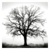 Fountain Oak Fotografisk tryk af Jamie Cook