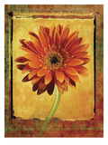 Gerber Daisy Photographic Print by Doug Landreth