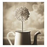 Allium Photographic Print by TM Photography
