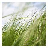 Sea Grasses 1 Fotografie-Druck von Paul Edmondson