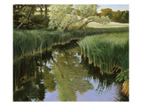 Cattail Creek Giclee Print by Stephen Henning