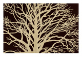 Tree in Sepia Giclee Print by Mary Calkins
