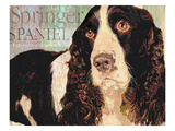Springer Spaniel Prints by Wendy Presseisen