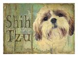 Shihtzu Giclee Print by Wendy Presseisen