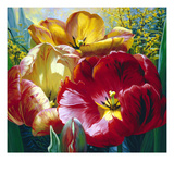 Tulip Trio Prints by Elizabeth Horning