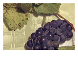 Pinot Noir 1 Giclee Print by Paul Loverme