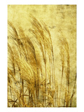Grass Series III Photographic Print by Doug Landreth