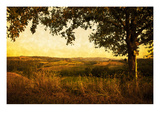Fields of Tuscany Photographic Print by Doug Landreth