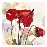 Crimson Poppy 2 Prints by  Marysia