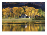 Aspen Trees with Barn Photographic Print by Jamie Cook