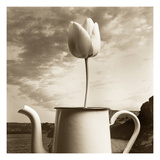 Tulip Teapot Photographic Print by TM Photography