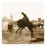 Bucking Bronco Photographic Print by  Trevally Inc.