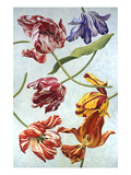 Floral Tulips III Giclee Print by David Hwang