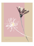 Simplicity 3 Giclee Print by Ashley David