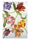 Floral Tulips IV Giclee Print by David Hwang