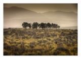 Row of Trees Photographic Print by Jamie Cook