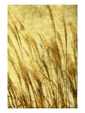 Grass Series II Photographic Print by Doug Landreth