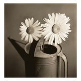 Daisies in Can Photographic Print by TM Photography