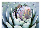 Aloe 2 Photographic Print by  PhotoDF