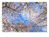 Forest Canopy 1 Photographic Print by Paul Edmondson