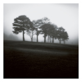 Fog Tree Study 2 Photographic Print by Jamie Cook
