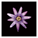 Passion Flower Photographic Print by  JoSon