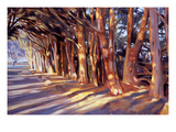 Shadows on the Road Giclee Print by Sarah Waldron