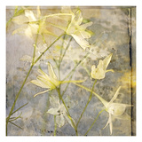 Cloud Larkspur 1 Photographic Print by Thea Schrack