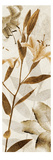 Ambre Antique II Giclee Print by Thea Schrack