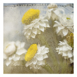 Winged Everlasting 2 Photographic Print by Thea Schrack