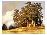 Eucalyptus Grove Giclee Print by Sarah Waldron