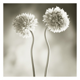Fluffy Plants Photographic Print by TM Photography
