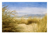 Dune Grass 4 Photographic Print by Thea Schrack
