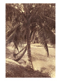 Under the Palm Premium Photographic Print by Thea Schrack