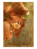 Hibiscus 1 Photographic Print by Thea Schrack