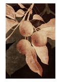 Hanging Apples I Photographic Print by Thea Schrack