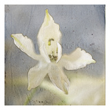 White Flower 3 Photographic Print by Thea Schrack