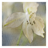 White Flower 2 Photographic Print by Thea Schrack