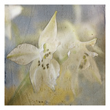 White Flower 5 Photographic Print by Thea Schrack