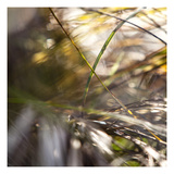 Grass Study 4 Photographic Print by Paul Edmondson