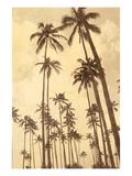 Palm Vista V Fotografisk tryk af Thea Schrack