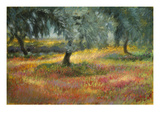 The Olive Trees Giclee Print by Sarah Waldron